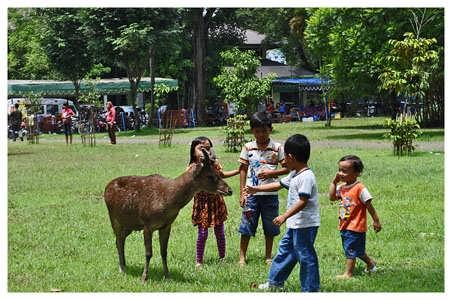 rusa di Taman Balekambang