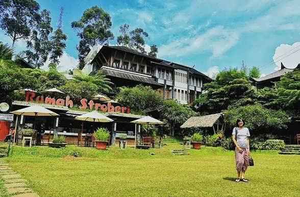 Rumah Stroberi Lembang, Petik Sendiri Stroberi yang Ingin Anda Santap