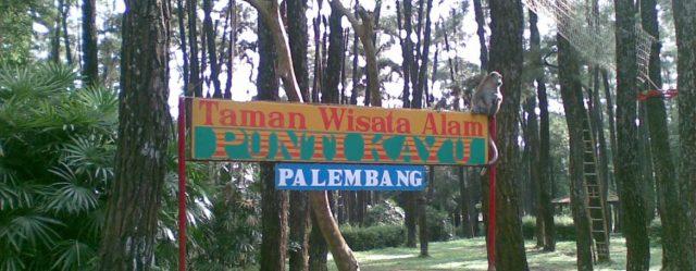 Hutan Punti Kayu